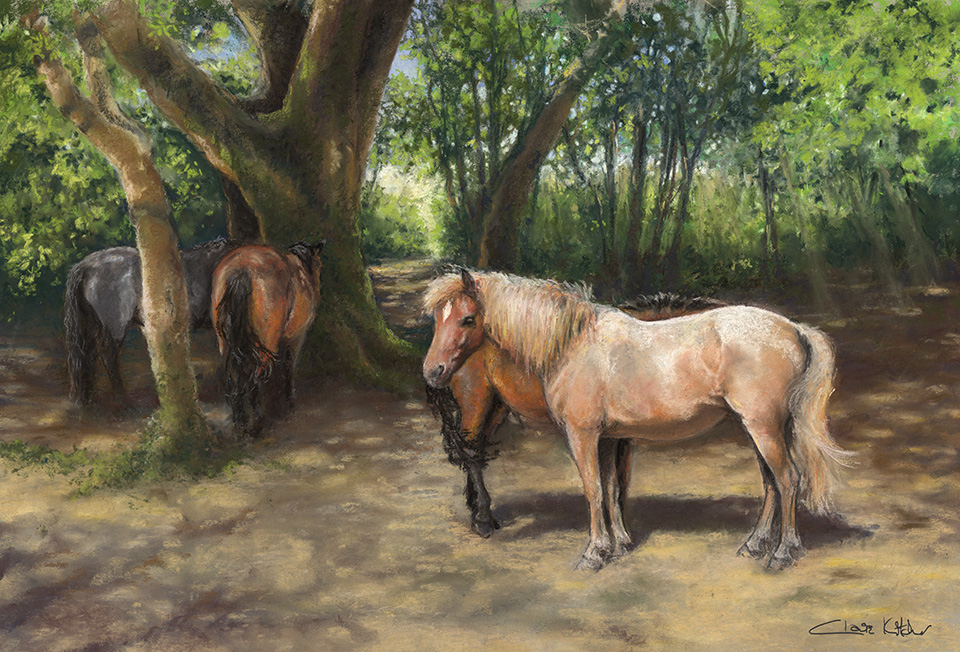 New Forest Ponies Shading in the Copse